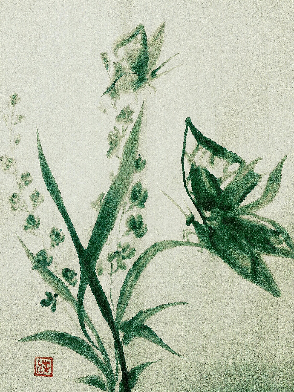 Mariposas y orquídeas